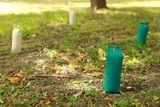 Firedog Lining dummy 500 g grün