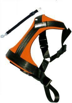 Greendog Sicherheitsgurt L orange