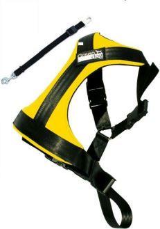 Greendog Sicherheitsgurt L gelb